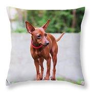 Portrait Of Red Miniature Pinscher Dog Throw Pillow