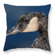 Portrait Of Young Canada Goose Throw Pillow