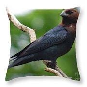Posing Brown-headed Cowbird Throw Pillow