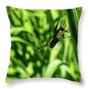 Posing Dragonfly 2 Throw Pillow