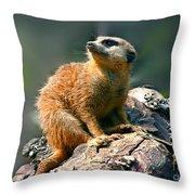Posing Meerkat Throw Pillow
