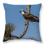 Posing Osprey Throw Pillow