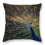 Posing Peacock Throw Pillow