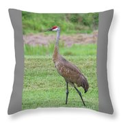Posing Sandhill Throw Pillow