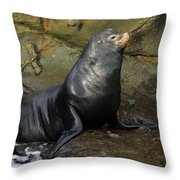Posing Sea Lion Throw Pillow