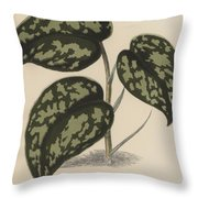 Pothos Argyraea Throw Pillow