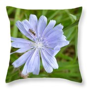 Powder Blue Chicory Throw Pillow