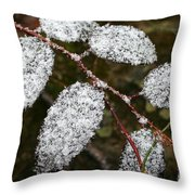 Powdered Throw Pillow