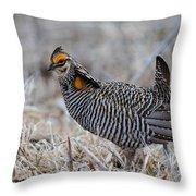 Prairie Chicken Ll Throw Pillow