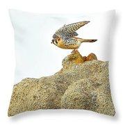 Prairie Falcon Throw Pillow