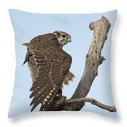 Prairie Falcon Stretching Throw Pillow