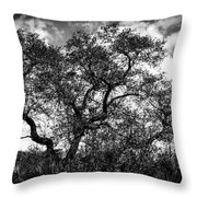 Prairie Oak Throw Pillow