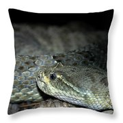 Prarie Rattle Snake Throw Pillow