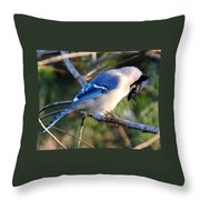 Praying Blue Jay Throw Pillow