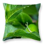 Praying Mantis-1 Throw Pillow