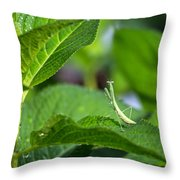 Praying Mantis-2 Throw Pillow