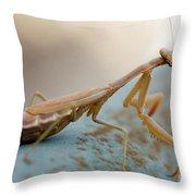 Praying Mantis Close Up Throw Pillow