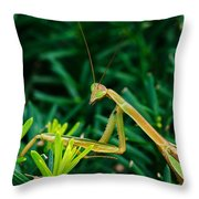 Praying Mantis Throw Pillow