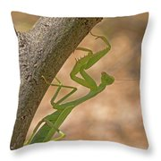 Praying Mantis On The Hunt Throw Pillow