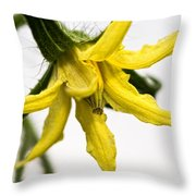 Pre-tomato Throw Pillow