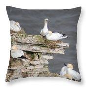 Precarious Nesting Bempton Gannets Throw Pillow
