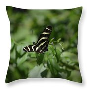 Precious Black And White Zebra Butterfly In The Spring Throw Pillow