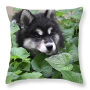 Precious Fluffy Alusky Puppy Dog In Green Foliage Throw Pillow