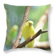 Precious Yellow Budgie Parakeeet In The Wild Throw Pillow