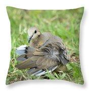 Preening Dove Throw Pillow