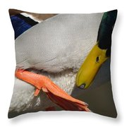 Preening - Santa Cruz, California Throw Pillow