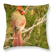 Pretty As A Picture  Throw Pillow by Lori Frisch