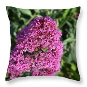 Pretty Blooming Pink Phlox Flowers In A Garden Throw Pillow
