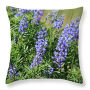 Pretty Blue Flowers Of Silky Lupine Throw Pillow