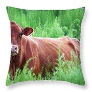 Pretty Brown Cow  Throw Pillow