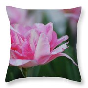 Pretty Candy Striped Pale Pink Tulip In Bloom Throw Pillow