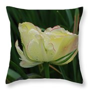 Pretty Cream Colored Tulip Edged In Red With Dew Throw Pillow