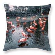Pretty Flamingoes Throw Pillow