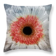 Pretty Gerbera Macro Throw Pillow