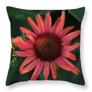 Pretty In Coral Throw Pillow