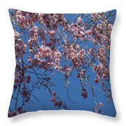 Pretty In Pink - A Flowering Cherry Tree And Blue Spring Sky Throw Pillow