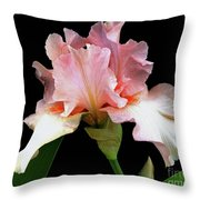 Pretty In Pink - Bearded Iris Throw Pillow