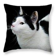 Pretty Kitty Cat 2 Throw Pillow