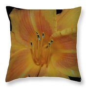 Pretty Orange Daylily Flowering With Pollen On It's Stamen Throw Pillow