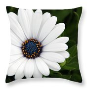 Pretty Perfect Throw Pillow
