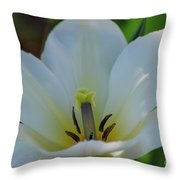 Pretty Perfect White Tulip Flower Blossom In The Spring Throw Pillow