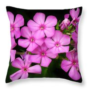 Pretty Pink Prairie Phlox Throw Pillow