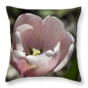 Pretty Pink Tulip Squared Throw Pillow