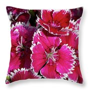 Pretty Pinks Throw Pillow