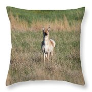 Pretty Pronghorn On The Plains Throw Pillow