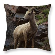 Pretty Proud Throw Pillow by Barbara Schultheis